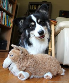 Pudge | The 40 Most Influential Corgis Of2012
