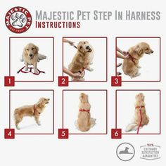 Best No Pull Harness for All Dogs-Sizes      Check this out>>>>>>>   http://amzn.to/2akK3xs