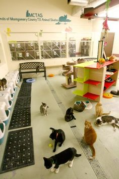 another great idea for my future pet shelter having a room for small animals where the public can go in and visit them and the not so friendly or sick - Cat Room Design Ideas