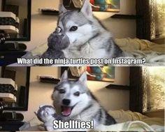 SHELLFIES