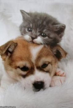 Kitten And Puppy - funnykittensite.com See more cute kitten at - Catsincare.com