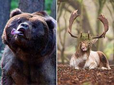 Animais Pouco Fotogênicos