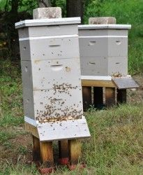 Bee Hives | Best tips and important things to know for beekeeping on the farm or homestead