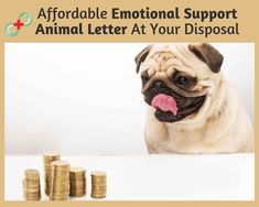 Pet Support Doctor has a team of licensed mental health professionals that provide consultations for obtaining emotional support animal letter.   We have streamlined the telemedicine process so you can get ESA recommendations without any hassles.   Just pay $89 for travel/housing and start your healthy life right away. Animal Letters, Doctors Note, Emotional Support Animal, A Team, Healthy Life, Mental Health, Lettering, Pets, Travel