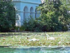 Meine Lieblingsbucht mit verwunschenen Wassergarten. #wienerroither #maguat #bäckerei #brot #handgemacht #bäcker #wörthersee #kärnten #austria Carinthia, Water Garden, Caribbean, Paradise, Alps, Vacation