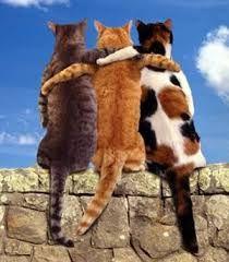 Resultado de imagen para gatos y perros amigos