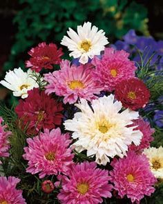 Cosmos - annual, sun, partial shade, can be started indoors (but not necessary) 48""