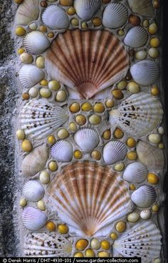 Mosaic to make with my shells from the island here and Sanibel