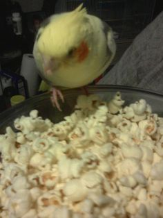 Free Free still at the popcorn. We didn't let her eat all the popcorn, for sure.