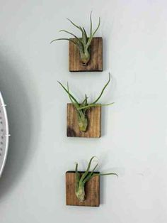 idée de déco murale avec des plantes suspendues