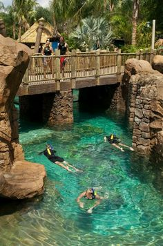 this is soo much fun when ever my family goes to florida we go to discovery cove ..and its awesome...i even swam with sharks