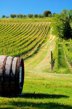 Barrel in Vineyard! Volterra, Tuscany, by BBMaui, via Flickr