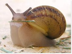 Snail looking like she fetched that stick. I bet she did.