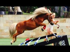"""Crunch ★ """"FREE JUMPING 2"""" ★ (NEW) Miniature Horse (champion) - YouTube"""