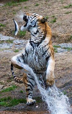 130 Ideas De Cazadores Animales Cazadores Animales Salvajes