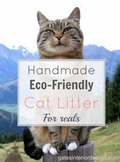Well start shredding the news.paper that is. Marc Smith, the eco-friendly kitty litter creator, was tired of lugging Natural Cat Litter, Animals And Pets, Cute Animals, Cat With Blue Eyes, Pet Beds, Cat Breeds, Eco Friendly, Cats, Zero Waste