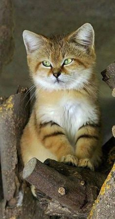 5d8913ed4b0e4 1672 Best Cats images in 2019 | Pretty cats, Animal pictures ...
