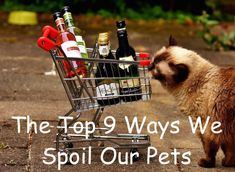 The Top 9 Ways We Spoil Our Pets #pets #dogs #cats #spoiled Animal Projects, Pet Care, Facts, Dogs, Fun, Animals, Animales, Animaux, Pet Dogs