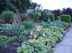 A lovely inspiring story: Marguerite started a small community garden in front of her house on a...