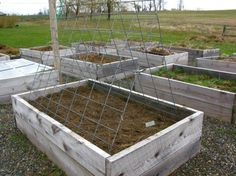 livestock fence for trellis Viehzaun für Gitter Pea Trellis, Garden Trellis, Raised Garden Beds, Raised Beds, Farm Gardens, Outdoor Gardens, Container Gardening, Gardening Tips, Cattle Panels