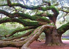 Interesting tree