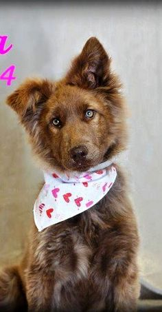 What a mesmerizing dog. Available for adoption in Los Angeles.
