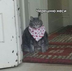 """Carry sweet cherries"" or ""nesi chereshnyu"". This meme symbolizes the Russian love for eating cherries. Russian Cat, Russian Memes, Memes Humor, Cat Memes, Stupid Cat, Stupid Memes, Funny Video Memes, Funny Jokes, Salem Cat"