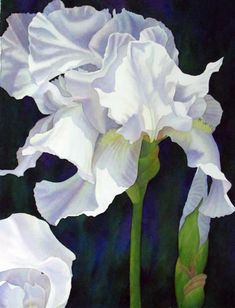 Diana Miller-Pierce Watercolor