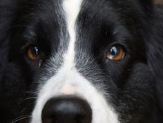 """Le Sénat a rejeté le texte qui devait modifier le statut de l'animal pour le reconnaître comme """"un être vivant doué de sensibilité"""". http://www.yummypets.com/fun/article/51527-pour-le-senat-les-animaux-ne-sont-pas-doues-de-sensibilite"""