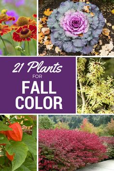 If you long for a bit of color in your autumn yard, take heart. Here are 21 plants that will provide vibrant color and visual interest in your fall landscape, even as cooler days give way to winter.