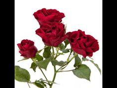 Бисероплетение - Роза кустовая из бисера | mdzivis yvavilebi da xeebi | Postila
