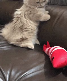 Attacking Toy