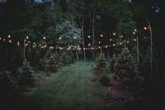 Intimate $5,000 Tree Farm Wedding in Connecticut: Kristina and Jeffrey