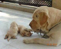 Puppy's first boop *