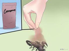 Saupoudrez de la cannelle dans la maison. La cannelle en poudre est un repoussant naturel pour les scorpions. Saupoudrez-en dans les endroits sombres, les rebords de fenêtre et autour des plinthes pour éloigner les scorpions.  - Get Rid of Scorpions Step 13.jpg