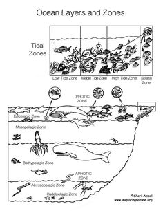 Plate Tectonics Coloring Sheet (Earth History and AP