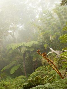Piton plaine des fougéres , La Réunion