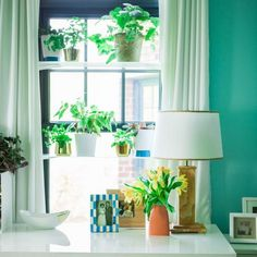 window shelves for decorating with glass items, house plants and tableware