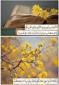 Quran Verses, Quran Quotes, Islamic Quotes, Calligraphy Art, Allah, Photography, Maid, Fotografie, Photograph
