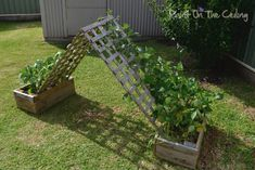 This is a great way to do a trellis for climbing plants! I think I'll stick one… – natural playground ideas Garden Trellis, Garden Beds, Bean Trellis, Lattice Garden, Outdoor Projects, Garden Projects, Cucumber Trellis, Outdoor Play Spaces, Natural Playground