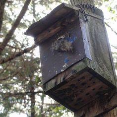 【ak1h1r00】さんのInstagramをピンしています。 《. . 2017/01/31(月) . 猿投山に通い始めて、初めて野生のリスが目の前を横切って行くのを見ました😳 . この巣箱はその子のかな? . #愛知県 #豊田市 #猿投山 #東海自然歩道 #巣箱 #自然 #森 #木 #冬 #風景 #登山 #山 #nest #birdbox #nature #forest #woods #winter #landscape #trekking #mountain》