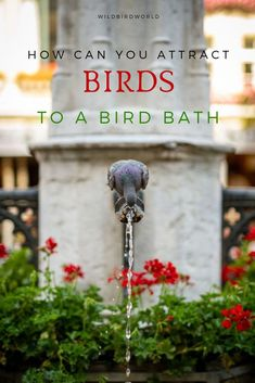 How to attract birds to a bird bath? - Wild Bird World Biology Humor, Ancient Chinese Architecture, Raising Goats, Lush Lawn, Viewing Wildlife, How To Attract Birds, Chinese Garden, Chicken Breeds, Natural Scenery