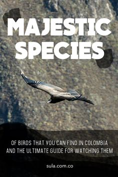 Click here to find everything you need to know before coming to the country with most bird species in the world. Bird Species, Bird Watching, Conservation, Tourism, Country, Colombia, Turismo, Rural Area, Country Music
