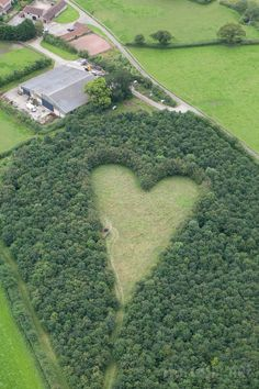 Heart meadow planted by Winston Howes for his late wife Janet