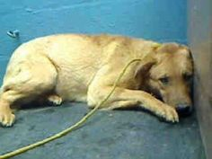 PLEASE REPIN!! URGENT!!!Terrified young male  www.examiner.com/...