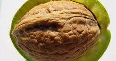 Vlašské ořechy, tedy plody Ořešáku královského, jsou výborné a velmi zdravé oříšky, které mají nezastupitelné místo v české kuc Apple Pie, Cabbage, Health Fitness, Vegetables, Ethnic Recipes, Desserts, Food, Gardening, Ebay