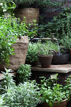 The Herbalists Garden - Orange tree in pot... oh I wish I lived in a ...