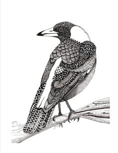 This striking magpie is a high quality print of my original art work on 300 gsm card stock. This piece depicts a juvenile Australian magpie detailed in intricate patterns. The original drawing is in black ink and graphite on white paper. Frame not included. Photos watermarked for copyright purposes only.