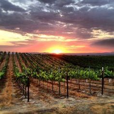 Paso Robles, CA My backyard view.