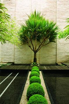 Landscape Designs~ The sculptural permanence of this dramatic outdoor room is underlined by the selection of evergreen plants...Garden Design Magazine
